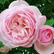 バラの香りの小部屋