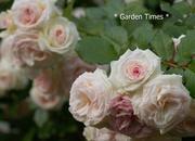 * Garden Times *