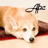 DOG AROMA −愛犬のためのアロマセラピー−