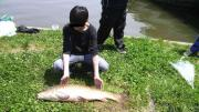 SHUNの鯉釣り日誌