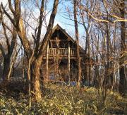 小さな雑木林と山小屋の話。