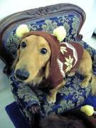 犬の麻酔なし歯石取り&トリミングの楽珍感