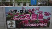 こころ園芸ブログ
