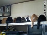 たっぷり猫だらけ