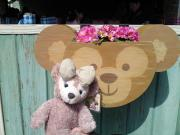 ぶーくまのブログ