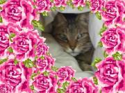 薔薇猫とフレンチ