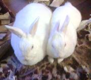 ミニウサギ・ミューとモモの部屋
