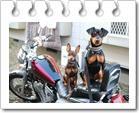 Dog Partner 〜Enjoy life with Dog