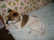 愛犬と上海生活