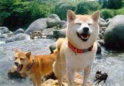 柴犬Cooと空の日記