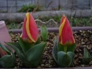 季節の花の名前の由来や薬効・通販、ジョンの花ブログ