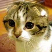 さくたろぐ 猫ブログ