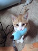 愛猫トラの写真館