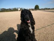 黒犬COOL(クー)と一緒にのんびり散歩