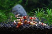 熱帯魚ショップ AQUA SALTYの歩み