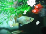 Enjoy Aqua Life