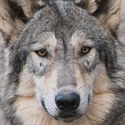 動物園写真ブログ Digi*Loup
