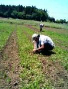 畑人への道〜新規就農を目指して〜