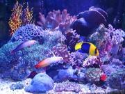 ホームアクアリューム 海の物語
