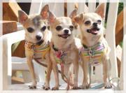 愛犬中心的生活日記