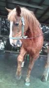 まみちゃんの馬ブログ