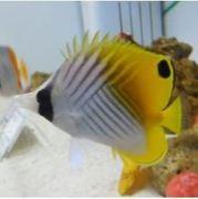 butterflyfishさんのプロフィール
