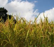 仁多米稲の花さんのプロフィール