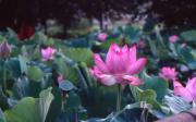 lilyのブログ