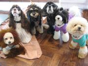 Hale-ILIO    イリオ看板犬達のブログ