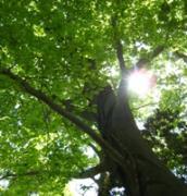 おどろき森の季山野の記