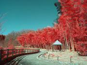 KOIKOIの赤外線写真の実験室