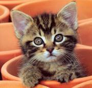 子猫ペットはかわいい
