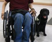 車椅子と僕と介助犬 [介助犬さくらと僕の日常日記]