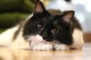 歌慧秋と猫の新生活日記