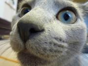 ボクは灰猫、グリル