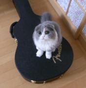 猫とギターのある生活