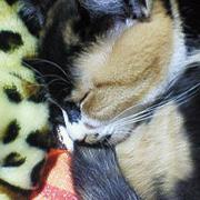 三毛猫マメさんの部屋