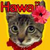ハワイde生活 〜アロハ・ピュアラな暮らし〜