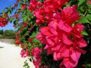 ぷかぷか雲とたぷたぷ波。ぷるるゆららと赤花ゆれて。