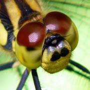 気ままに昆虫写真館