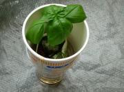 世界最強の儲かるベランダ菜園 ローコスト水耕栽培