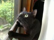 猫のつぶやき