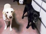 介助犬デイジー&引退犬エルモのブログ