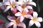 Pua Nani Blog