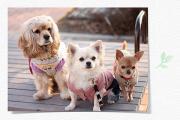 もっと「かえじゅうごっこ」犬3頭飼い