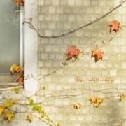 木の葉のオト