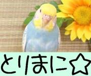 とりまに☆blog