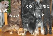 五犬☆五色 〜ごわんこ☆ごいろ〜