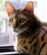 ベンガル猫とオーシャンビュー別荘