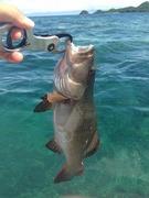志が低い釣り人のブログ